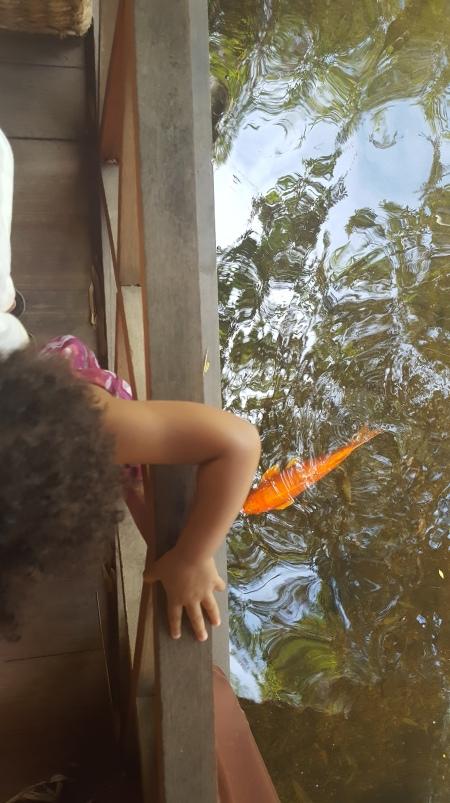 Fish & Toes 7